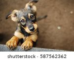 Stock photo dog 587562362