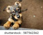 dog | Shutterstock . vector #587562362