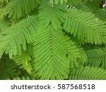 green leaf | Shutterstock . vector #587568518