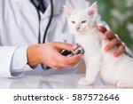 Stock photo white kitten visiting vet for check up 587572646
