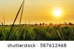 sunset over sugar cane field | Shutterstock . vector #587612468