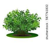bush hydrangea with green... | Shutterstock .eps vector #587761832