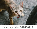 Stock photo cat look at me 587836712