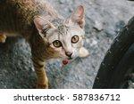 Cat Look At Me