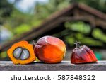 close up of fresh oil palm... | Shutterstock . vector #587848322