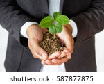 Businessman holding sprout tree, Business, sustainability, environment and conservation concept