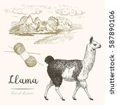 Llama. Set Of Vector Sketches...