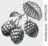 the raspberries on the branch... | Shutterstock .eps vector #587901242