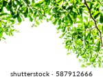 green leaf isolated on the... | Shutterstock . vector #587912666