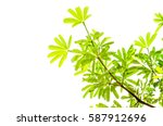 green leaf isolated on the... | Shutterstock . vector #587912696