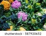 purple cauliflower  orange... | Shutterstock . vector #587920652