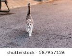 Cat Walking On The Street...