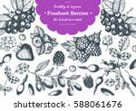 berries hand drawn vector... | Shutterstock .eps vector #588061676