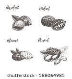 collection of hand drawn nuts.   Shutterstock .eps vector #588064985