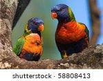 the rainbow lorikeet ... | Shutterstock . vector #58808413