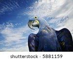 Brilliant Blue Hyacinth Macaw...