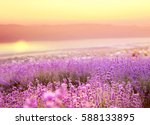 Beautiful Image Of Lavender...