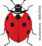 fine ladybug isolated on white | Shutterstock . vector #58824556