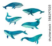 Beautiful Turquoise Six Whales...