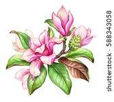 watercolor botanical...   Shutterstock . vector #588343058