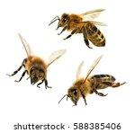 Group Of Three Bee Or Honeybee...