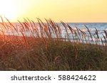 Tall Beach Grass Glows In...