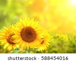 three bright yellow sunflowers... | Shutterstock . vector #588454016