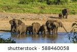 group of african bush elephants ... | Shutterstock . vector #588460058