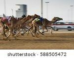 camel race in desert in morning | Shutterstock . vector #588505472