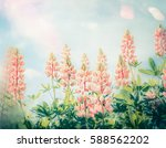 summer beautiful flowers garden ... | Shutterstock . vector #588562202