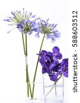 Small photo of Bright blue Orchid Agapanthus flower