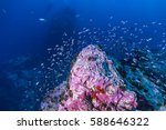 tropical fish  corals and... | Shutterstock . vector #588646322