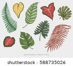 engraved  hand drawn tropical... | Shutterstock .eps vector #588735026