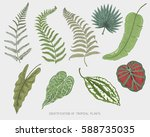 engraved  hand drawn tropical... | Shutterstock .eps vector #588735035