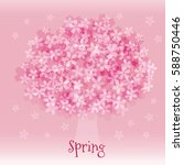 blue cherry blossoms in full...