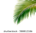 palm leaves isolated on white... | Shutterstock . vector #588812186