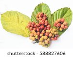 fresh coffee beans isolated on... | Shutterstock . vector #588827606