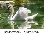 white swan on water of summer... | Shutterstock . vector #588900932