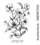 poppy flowers. vector sketch.    Shutterstock .eps vector #588987002