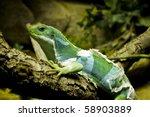 little lizard resting in a...   Shutterstock . vector #58903889