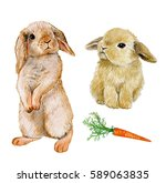 Set Rabbit With Carrot ...