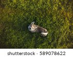 top view of the dog standing on ... | Shutterstock . vector #589078622