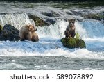 Alaskan brown bear sow and its cub at Brooks Falls in katmai National Park, Alaska