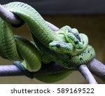Two Green Snakes On A Tree...