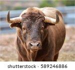 bull   Shutterstock . vector #589246886