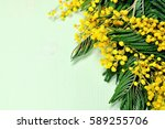 spring flowers of mimosa on the ... | Shutterstock . vector #589255706