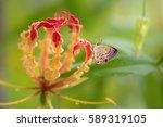 Butterfly On Amazing Flower....