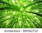early morning sun in the green... | Shutterstock . vector #589362722