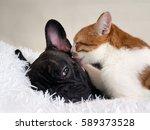 Stock photo the cat affectionately licks the dog white plaid 589373528