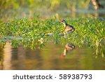 mccreadies billabong near... | Shutterstock . vector #58938793